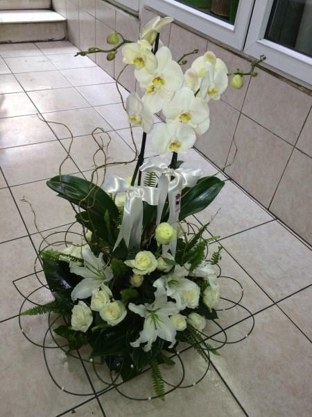 Orkideli kız isteme arajmanı