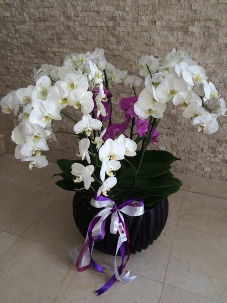 Orkideli tasarım