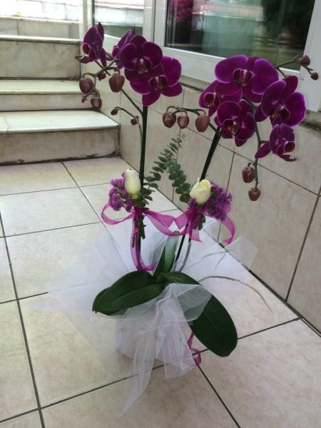 Saksı orkide dizaynı